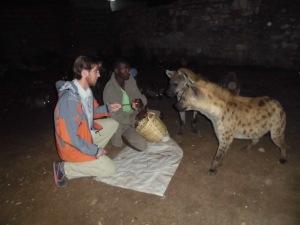 Hyènes à Harar, août 2013