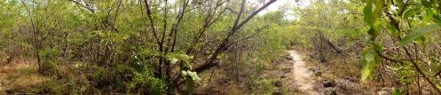 La mangrove de Port-Louis (2)