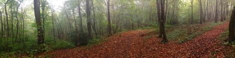 Chemin forestier, Saint-Wandrille-Rançon