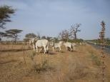 Région de Saint-Louis, Sénégal