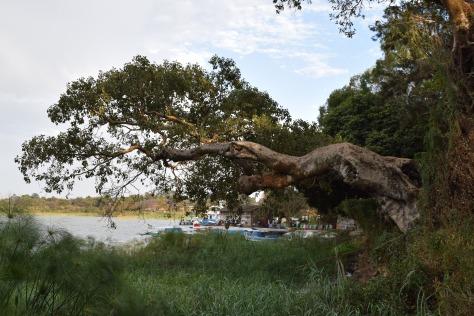 Lac Tana, Bahar Dar, Ethiopie