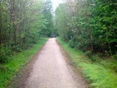 Forêt domaniale de Saint-Germain-en-Laye, entre Maisons-Laffitte et Conflans-Sainte-Honorine