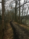 GR655, forêt de Rambouillet